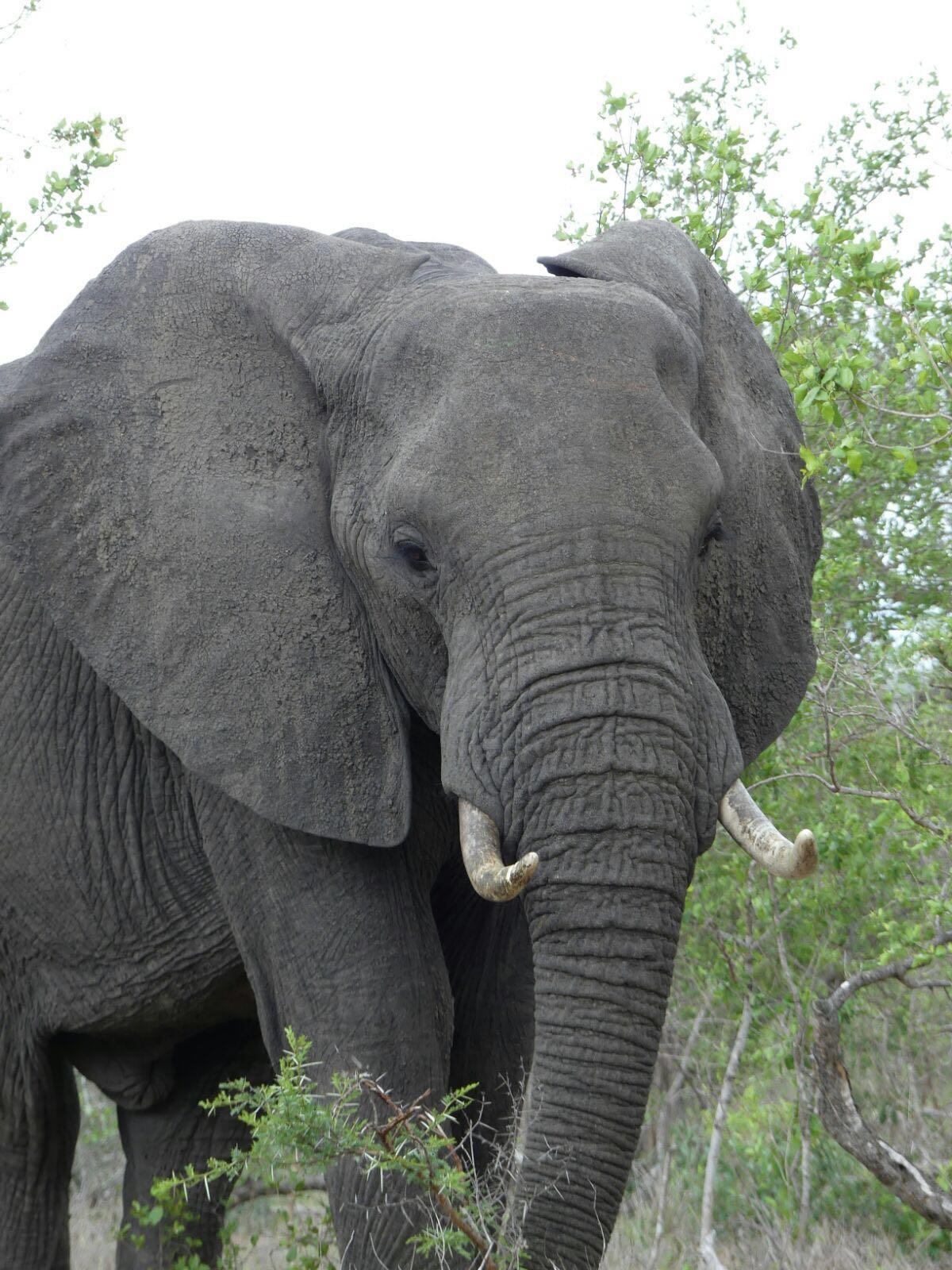 elefant heike